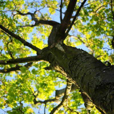 bark-maple-nature-4258